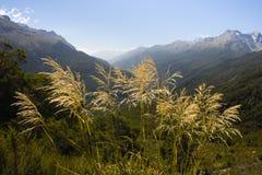 Alpi del sud Fotografia Stock Libera da Diritti