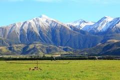 Alpi del sud in Nuova Zelanda Immagine Stock Libera da Diritti