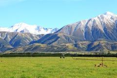 Alpi del sud in Nuova Zelanda Immagini Stock Libere da Diritti