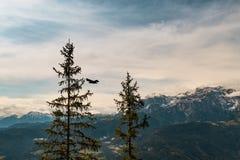 Alpi dell'Austria Immagine Stock