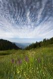 Alpi dell'Austria di estate Fotografia Stock Libera da Diritti