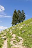 Alpi della Baviera degli alberi Immagini Stock Libere da Diritti