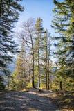 Alpi della Baviera degli alberi Fotografia Stock Libera da Diritti