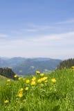 Alpi della Baviera dei ranuncoli Immagine Stock Libera da Diritti