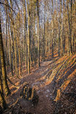 Alpi della Baviera del paesaggio Immagine Stock Libera da Diritti