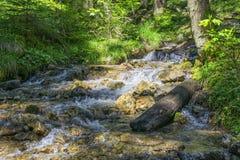 Alpi della Baviera della torrente Immagini Stock Libere da Diritti