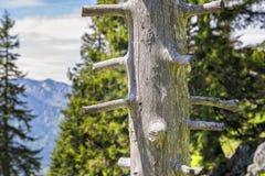 Alpi della Baviera di Breitenstein del tronco Fotografia Stock
