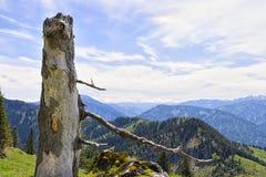 Alpi della Baviera di Breitenstein del tronco Fotografie Stock Libere da Diritti