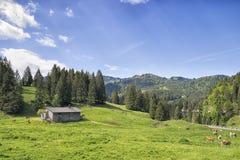 Alpi della Baviera vicino a Spitzingsee Immagini Stock