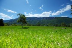 Alpi della primavera Fotografie Stock