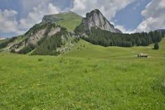 Alpi dello svizzero dei prati di rotolamento Immagini Stock