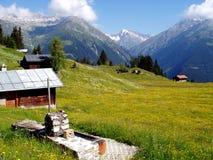 Alpi dello svizzero del prato Immagine Stock