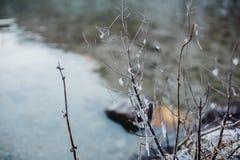 Alpi di Baviera di koenigssee di inverno Immagini Stock Libere da Diritti