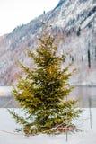 Alpi di Baviera di koenigssee di inverno Immagine Stock