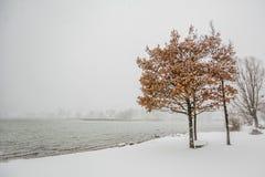 Alpi di Baviera di tegernsee di inverno Fotografia Stock