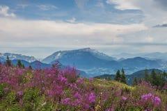 Alpi di Berchtesgaden con il fiore di lila immagine stock