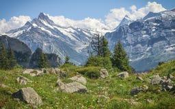 Alpi 2 di Bernese Immagine Stock Libera da Diritti