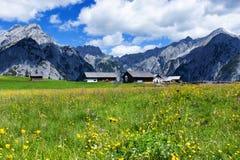 Alpi di estate con i bei fiori gialli vicino a Walderalm L'Austria, Tirol Fotografie Stock