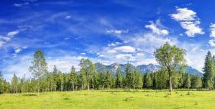 Alpi di immagine di panorama Fotografie Stock