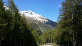Alpi di Itlain Immagine Stock