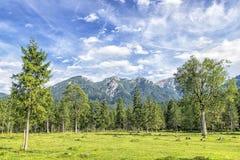Alpi di Karwendel Immagine Stock