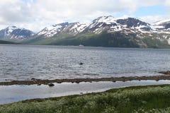Alpi di Lyngen, Norvegia Fotografie Stock