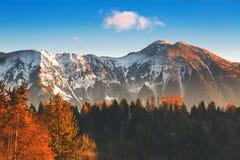 Alpi di Snowy e foresta di autunno su alba Immagine Stock