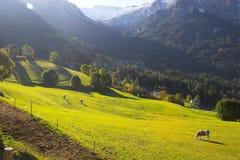 Alpi e cavalli italiani Fotografie Stock