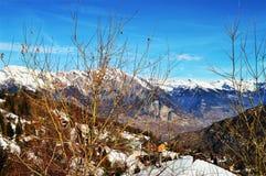 Alpi e piante svizzere Fotografie Stock