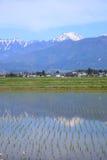 Alpi e risaia del Giappone Fotografie Stock Libere da Diritti