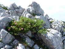 Alpi in Europa fotografie stock