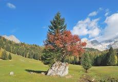 Alpi, Filzmoos, terra di Salzburger, Austria Fotografie Stock Libere da Diritti