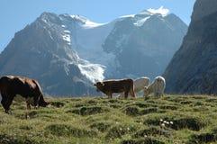 Alpi francesi, Francia Immagini Stock Libere da Diritti