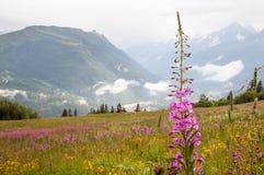 Alpi, Francia (vicino a Col de Voza) - panorama Fotografia Stock Libera da Diritti
