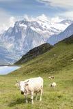 Alpi Ii Immagini Stock