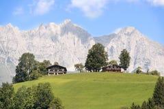 Alpi - imperatore selvaggio - in Austria Immagine Stock