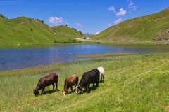 Alpi, Italia Della Maddalena di Colle Fotografie Stock Libere da Diritti