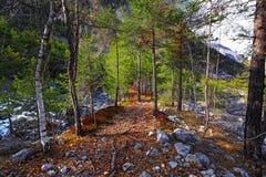 Alpi italiane, legno Fotografia Stock