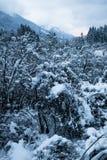 Alpi julian nell'alba nuvolosa nevosa, Kranjska Gora, Slovenia di bello paesaggio di inverno Immagine Stock