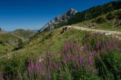 Alpi ligure Fotografia Stock Libera da Diritti