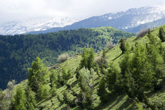 Alpi ligure, Italia Immagini Stock