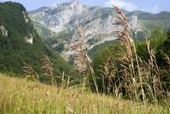Alpi-Maritimes, Francia Fotografia Stock Libera da Diritti