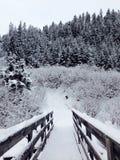 Alpi, Natale, Austria, montagna, corsa con gli sci, neve, nuovi anni di EVE, ponte Immagini Stock