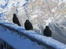 Alpi nell'orario invernale Fotografia Stock