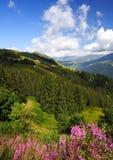 Alpi piene di sole Immagine Stock Libera da Diritti