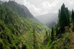 Alpi selvagge Immagine Stock