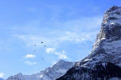 Alpi sotto cielo blu con gli uccelli Fotografia Stock