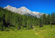 Alpi stupefacenti della dolomia Fotografia Stock
