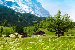 Alpi in Svizzera fotografia stock libera da diritti