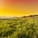 Alpi in Svizzera al tramonto Fotografia Stock